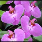 015-Floral-DC-DSC00135