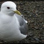 027-Animal-Alaska-DSC00479