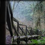 029-Nature-OrCa-DSC06462