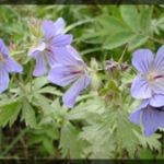 031-Floral-Alaska-DSC00823