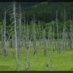 032-Nature-Alaska-DSC00761
