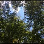 034-Nature-AT-IMG_1685
