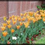 066-Floral-DC-DSC00481
