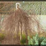 067-Nature-London-PA16441039816