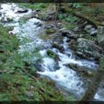 078-Nature-BlueRidge-20170530_184040