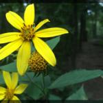 080-Floral-AT-IMG_1617