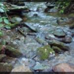 081-Nature-BlueRidge-20170530_182647