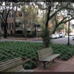 082-City-Savannah-IMG_1385