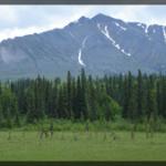 090-Nature-Alaska-DSC00376