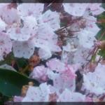 100-Floral-BlueRidge-20170603_072627